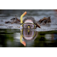 Snorkelling Experience Anglesey Marine Week `