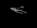 Snowdonia Spearfishing